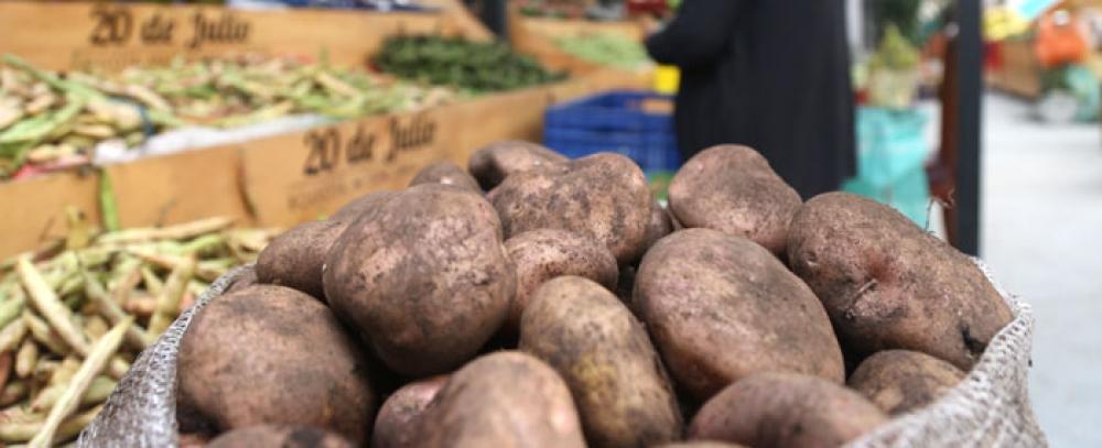 Naciones Unidas y la Alcaldía de Bogotá abren espacios en Plazas de Mercado a campesinos que sustituyeron cultivos ilícitos